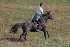 5Galop-konja-Zlatibor.jpg